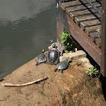 Domaine de la Chasse : tortues