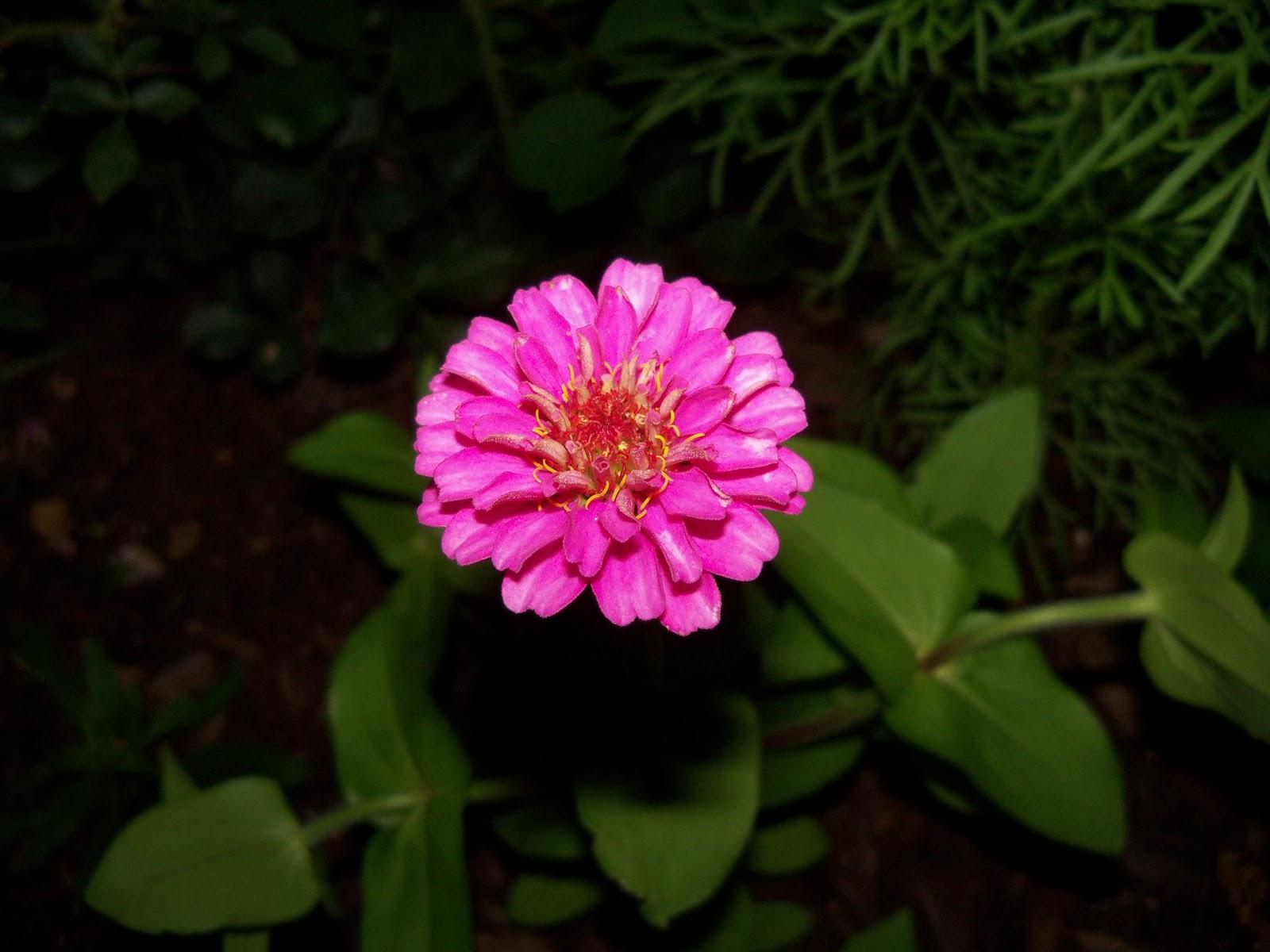 Gardening 2010, Part Two - 101_2519.JPG