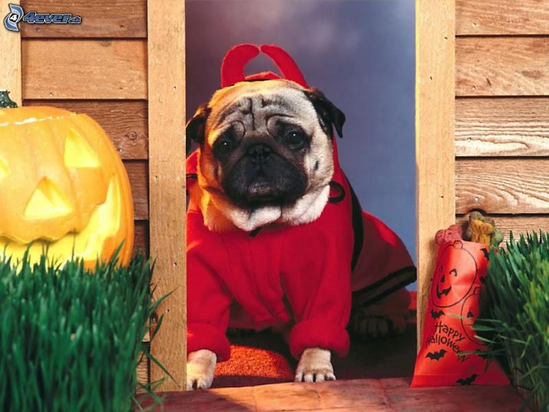 Helloween Puppy, Halloween