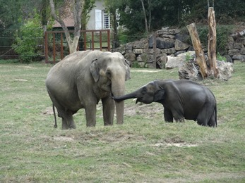 2018.08.25-016 éléphants d'Asie