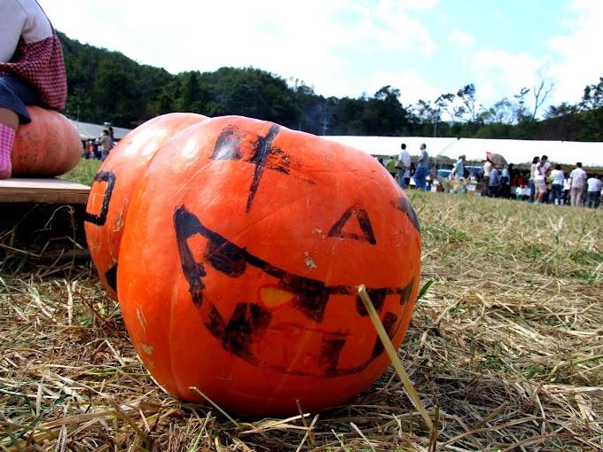 434 #ハロウィン #かぼちゃ #秋 #雑貨