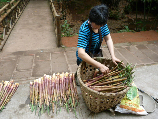 pousses de bambous .ça c' est délicieux