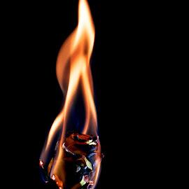 Burnt orange by Danny Charge - Flowers Single Flower ( close up, macro, flowers, single flower, flames, flower, fires, up close, fire, rose, flame, rose garden, roses, stem )