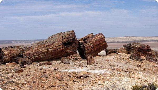 Monumento-Natural-Bosques-Petrificad
