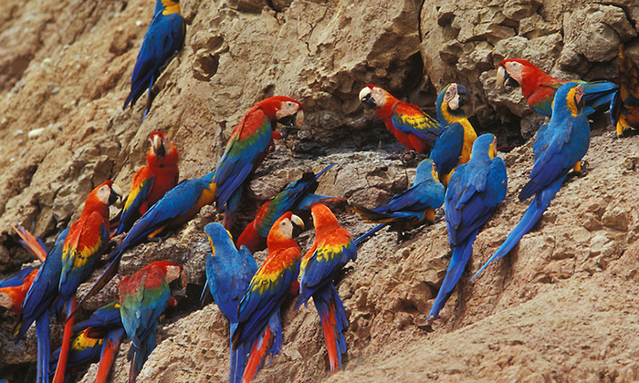 Macaw Clay Lick Surbound Expeditions