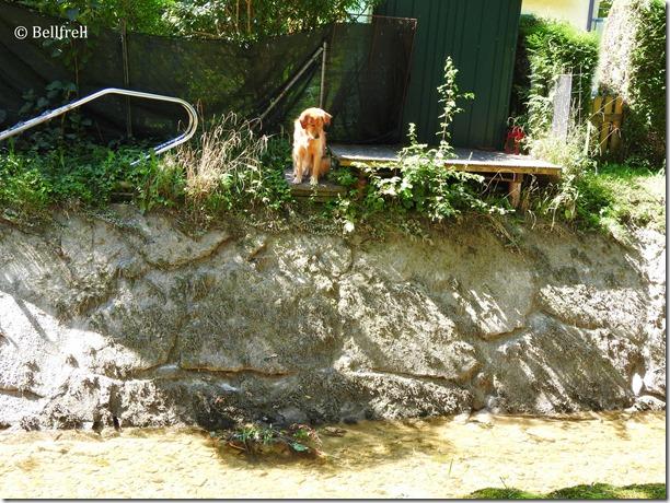 Hund sucht Almkanal (4)