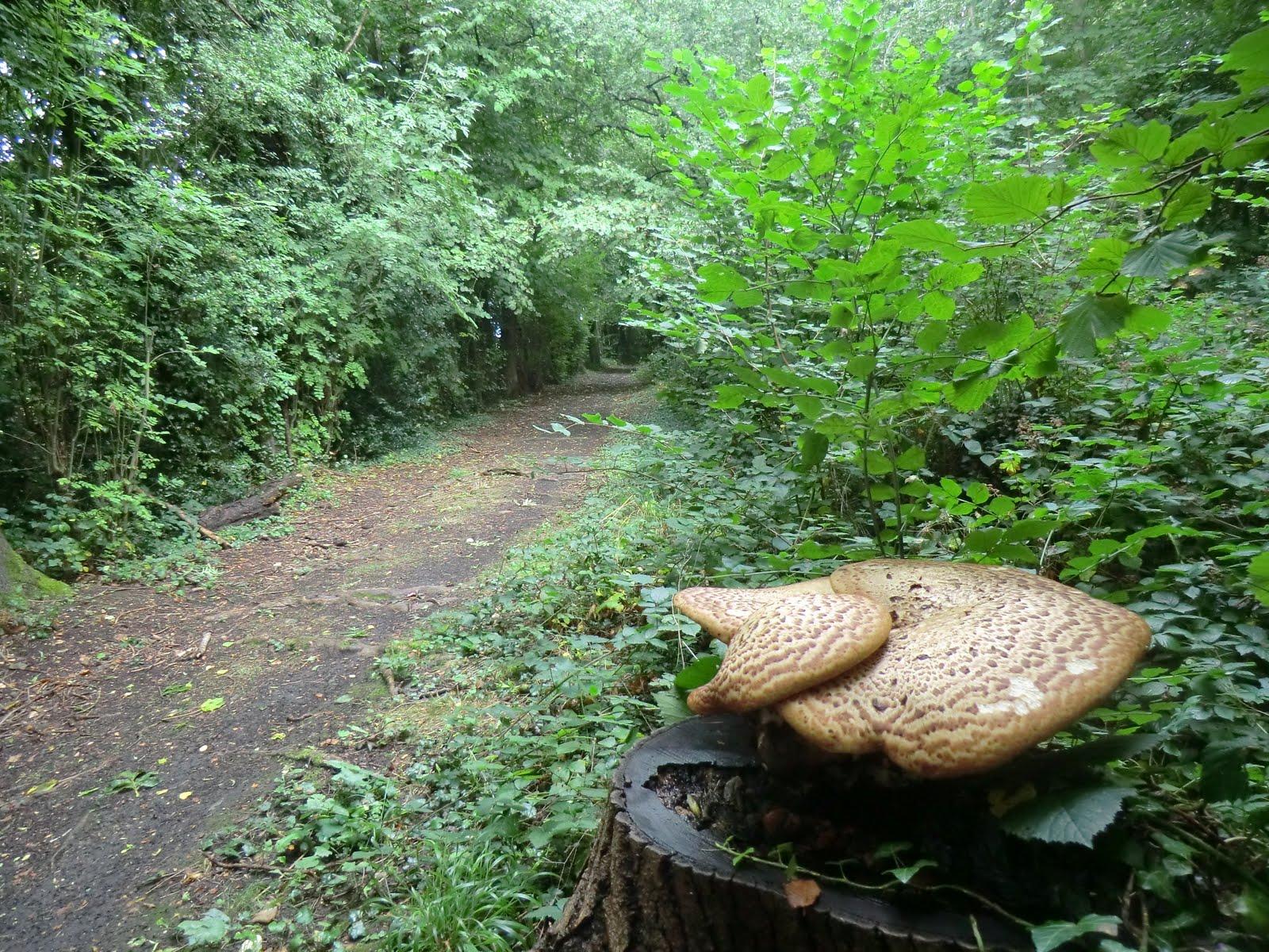 CIMG4210 Selsdon Wood