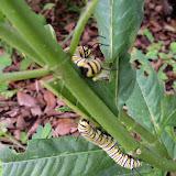 Gardening 2015 - 116_9247.JPG