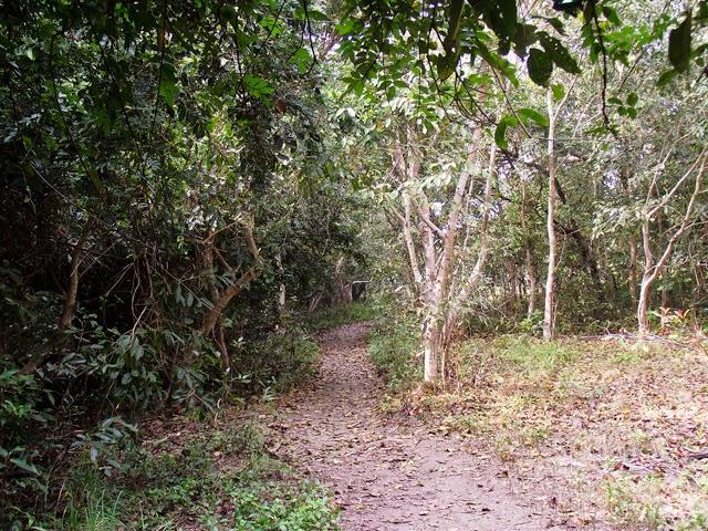 The trail inside Sundarbans where we'll take you to hike