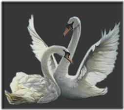 cisnes-buscoimagenes-8_thumb