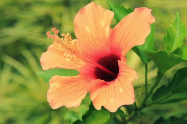 bunga raya cantik