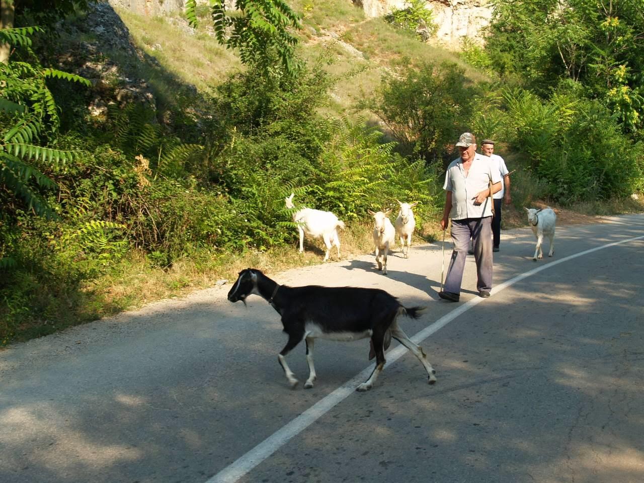 Smotra, Smotra 2006 - P0231367.JPG