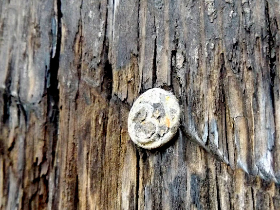 Date nail in railroad tie at White Rock Spring corral