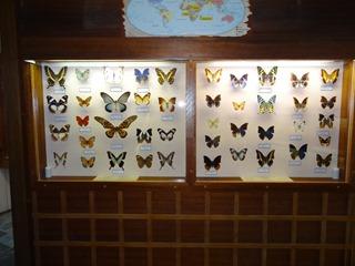 2016.03.14-003 papillons
