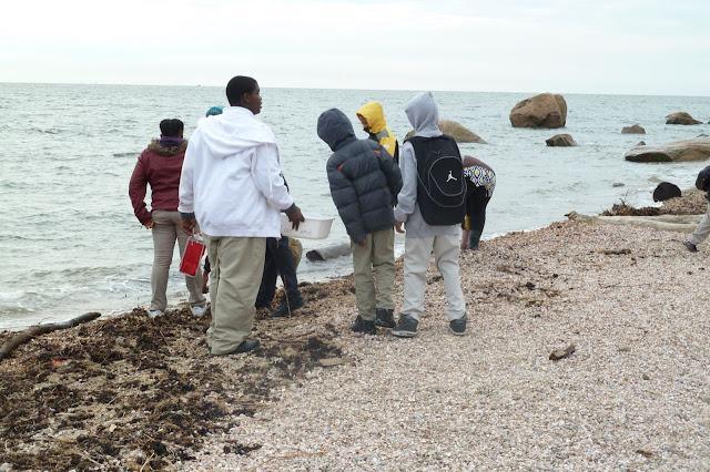 King/Robinson Students Visit Hammonasset - P1020416.JPG