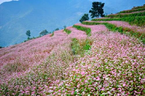 Bản đồ địa điểm có hoa tam giác mạch tại Hà Giang
