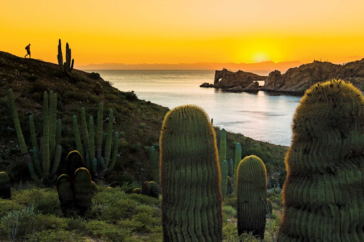 sea-of-cortez-cactus-at-sunset.jpg - Go on a hike and get incredible views of Loreto Bay National Park's landscape and giant barrel cactuses during a Lindblad Expeditions tour.