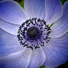 circle.. by Mirela Korolija - Nature Up Close Flowers - 2011-2013