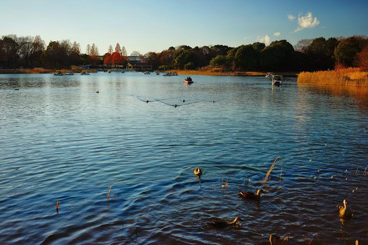 showa kinen park lake