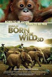 Born to Be Wild - Sinh ra trong hoang dã
