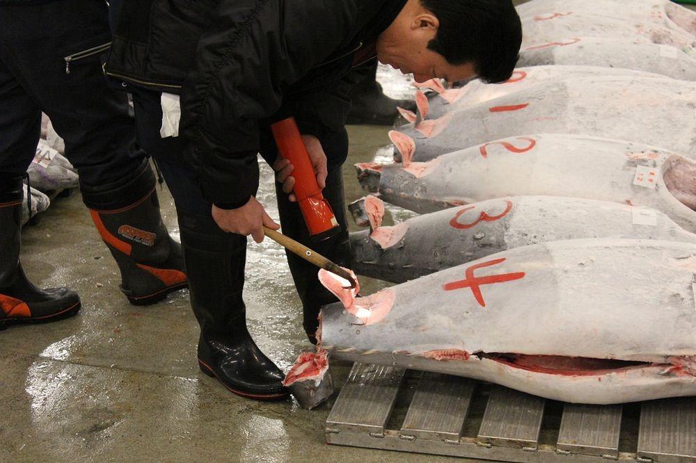 tsukiji-fish-market-14