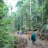 Biotope de Parides sesostris sesostris : la piste de Crique Tortue près de Saut Athanase sur l'Approuague (Guyane), 22 novembre 2011. Photo : Claude Renoton