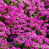 10-26-14 Dallas Arboretum - _IGP4309.JPG