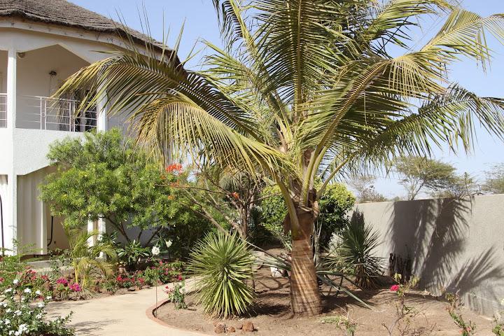 on s'eclate au .... Senegal IMG_1037