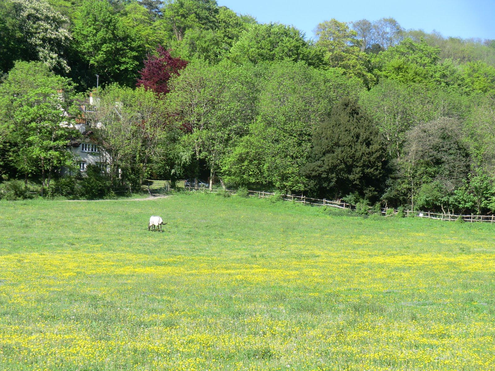 CIMG8169 Meadow near Woldingham station