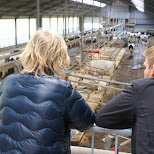 Icefarm Labora in Texel, Noord Holland, Netherlands