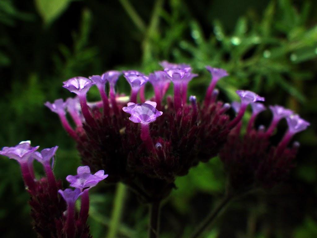 横アングルの濡れた花