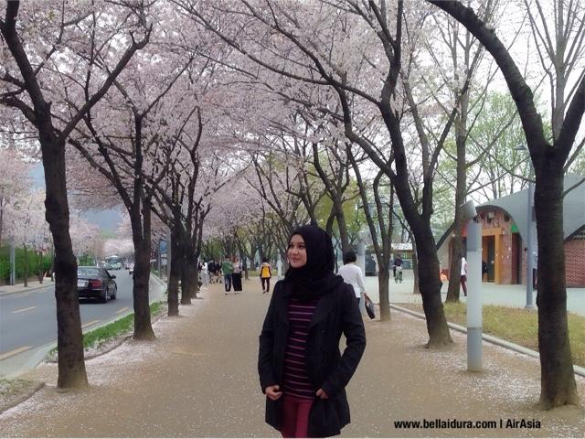taman sakura, korea, TAMAN SAKURA DI KOREA, Suseong Lake Daegu