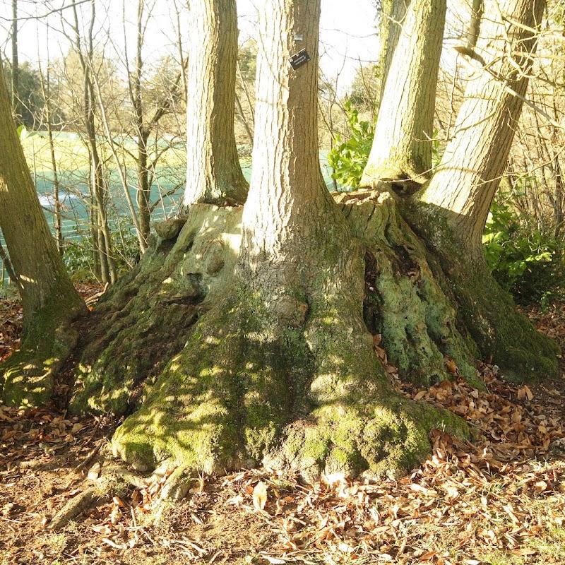 Stowe_Trees_03.JPG