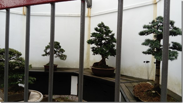 12 caged bonsai