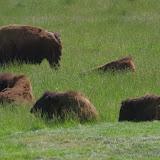 05-11-12 Wildlife Prairie State Park IL - IMGP1592.JPG