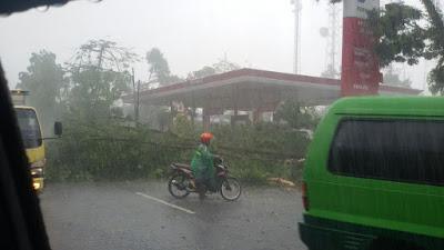 Pohon Yang Roboh dan Menimpa Kendaraan
