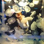 fumie and her jellyfish in Shinagawa, Tokyo, Japan