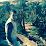 cherid ibrahim's profile photo