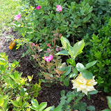 Gardening 2010 - 101_1544.JPG
