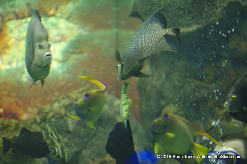 02-08-15 Corpus Christi Aquarium and USS Lexington - _IMG0512.JPG
