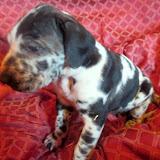 Petunia @ 5 weeks