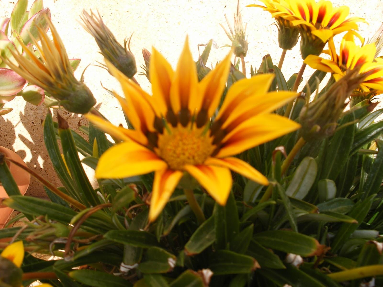 El huerto de ram n flores de plantas ornamentales for Concepto de plantas ornamentales
