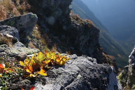 Malé čučoriedčie nad Žiarskou dolinou