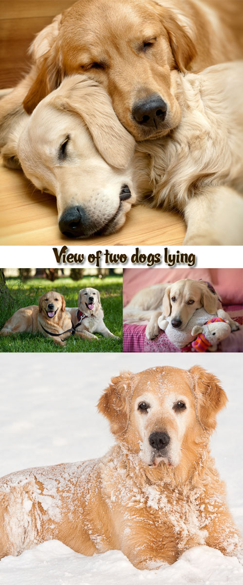 Stock Photo: View of two dogs lying