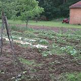 GardenAnnex6-2010