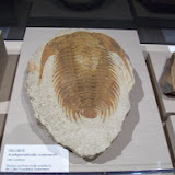 Houston Museum of Natural Science, Sugar Land - 114_6695.JPG