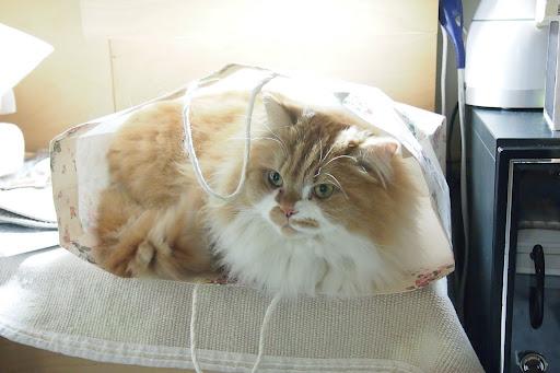 20120203 橘子躲在紙袋中
