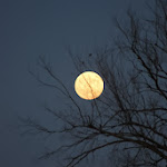 Mason_Shreve-two_birds_and_the_moon.jpg