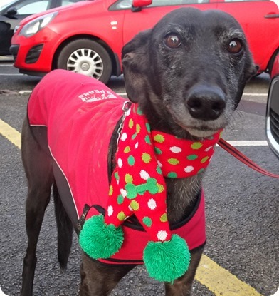 The first-ever Best dressed dog award was won by Peggy the lurcher who won a bag of doggy treats