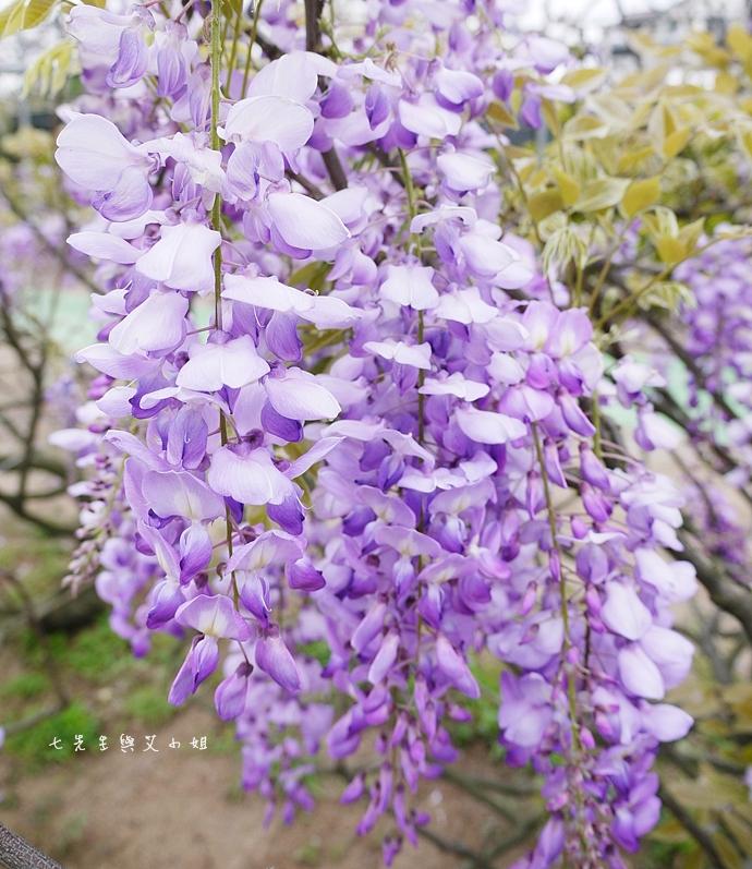 11 紫藤咖啡園 2014